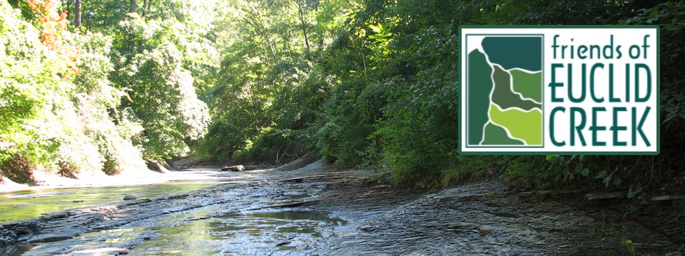 Friends of Euclid Creek (FOEC) - Local Organizations Directory - City of Lyndhurst, Ohio