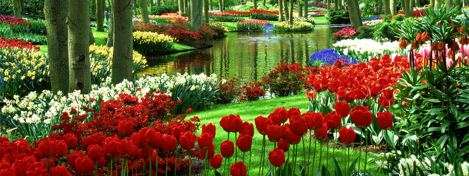A beautiful pond is surrounded by lush vegetation and flowers of all colors.
