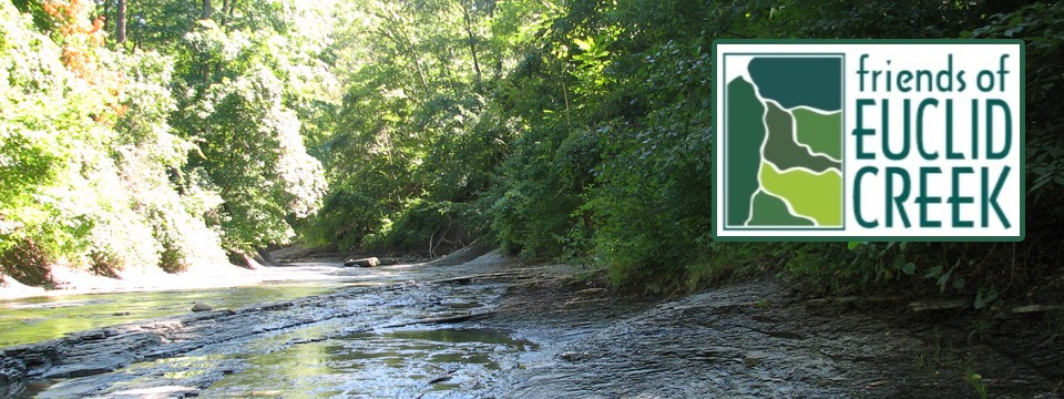 Friends of Euclid Creek (FOEC) Environmental Studies Scholarship