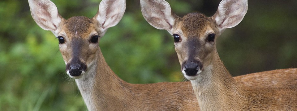 Deer Management Guide