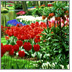 Lyndhurst Garden Club - Local Organizations Directory - City of Lyndhurst, Ohio