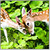 A deer doe and fawn touch their heads together tenderly.